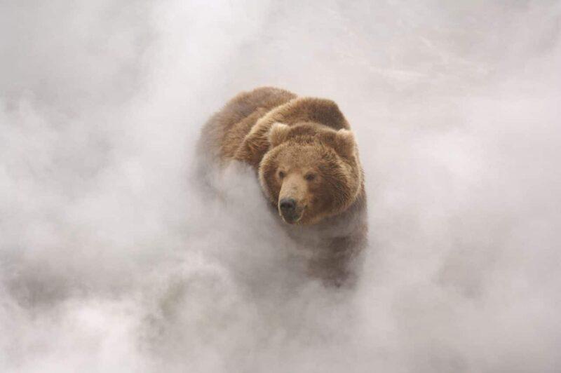 Photo du film Terre des ours