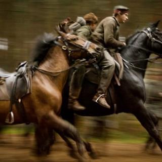 Cheval de guerre : Interview de l'éleveur de chevaux